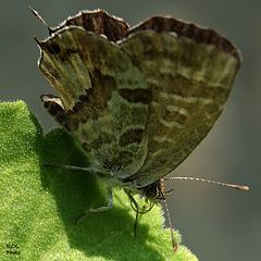 Brun/vert... bon H.A.N.W.E.