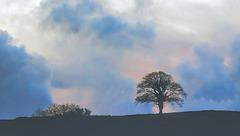 Bush & Tree