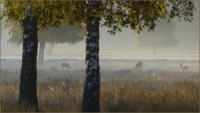 Last weekend I saw some Deer and a Rabbit in a very nice Morning Atmosphere...