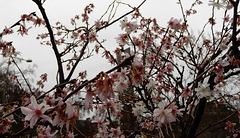 je vous offre un peu de printemps en ce mercredi gris