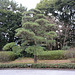 Tokyo, In the Garden of the Imperial Palace