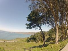 San Francisco Presidio View (0010)
