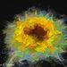 Sunflower Filter