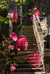 Steps and Roses (PiP)