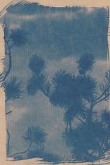 cyanotype sur kraft