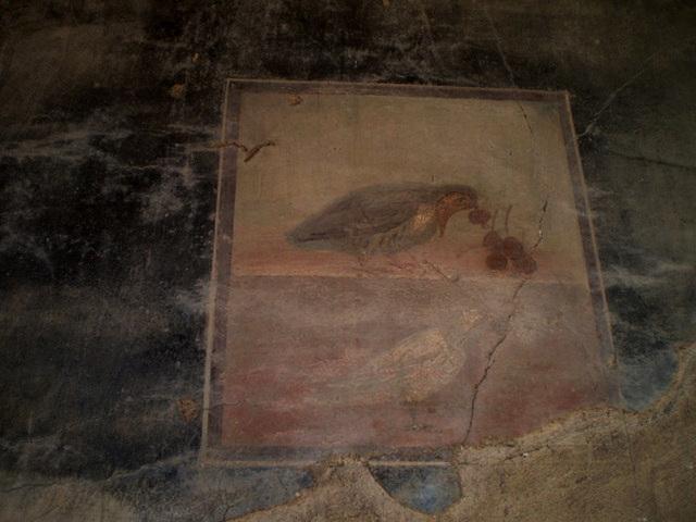 The bird fresco.