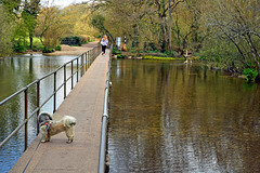 Bridge over the River Frome ~ Moreton.