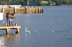 oaw - waterhead swan plus 2