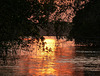 Final photo from Caroni Swamp, Trinidad