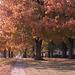 Fall Tree 1987