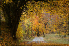 Der graue November treibt's bunt