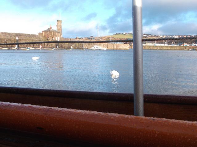 oaw - drifting swans
