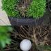 Wood Pigeon Egg