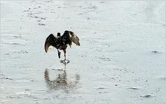 Walking over Ice :-)