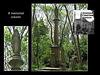 Nunhead Cemetery memorial column
