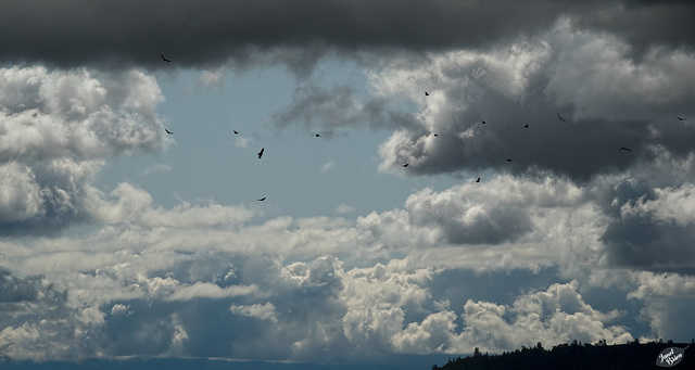Ominous September Image (+1 inset)