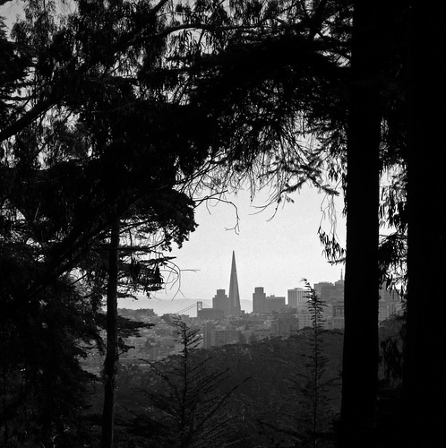 San Francisco Presidio View (3044A)