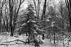 Première neige/First Snow