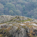 Rock climbing at Lake Padarn