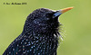 Starling 128 copy