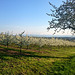 Abenspaziergang durch den Obstgarten Oberschwaben