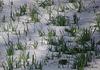 Le printemps en hiver .......