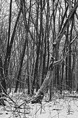 L'arbre dénudé/Nude