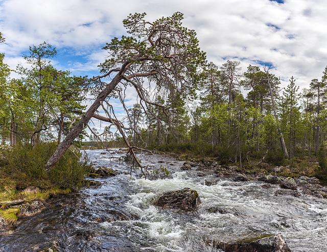 River Pakajoki in June