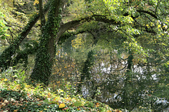 Le Parc de la Tête d'Or en automne, Lyon (Rhône, France)