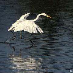 Je marche sur l'eau...!