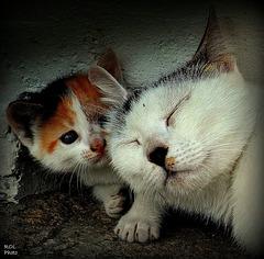 Hé, maman... suis là....!