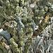 """Dinosaur Back"" Cactus, Take #2 – Desert Botanical Garden, Papago Park, Phoenix, Arizona"