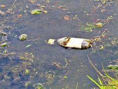 Floating Debris.