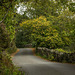 A single track road in Padarn country park