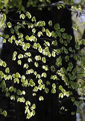 Allumer les feuilles....