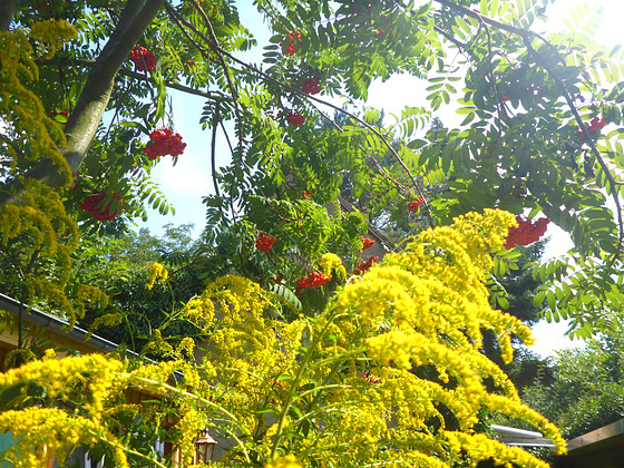 Die Farben des Sommers - grün rot gelb blau - la someraj koloroj - verda ruĝa flava blua