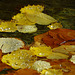 Herbst Feucht Fröhlich ;-)))