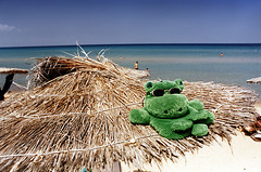 4/50: green hippos need no sun shades