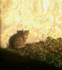 A cat in the October sun (PiP)