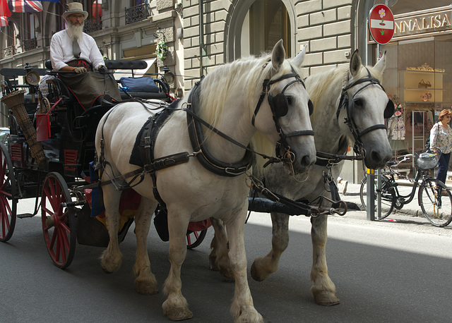 Horse drawn carriage in Florence, Italy