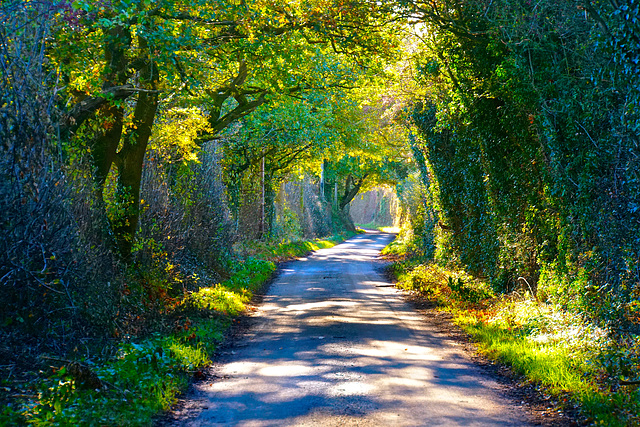 The winding country lane