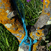 Penedos, Blue rope L1010234