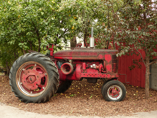 Old red tractor at the Saskatoon Farm