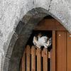 chatte perchée