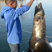 Namibia, Feeding the Brown Fur Seal in Walvis Bay