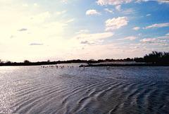 Réserve ornithologique du Pont de Gau