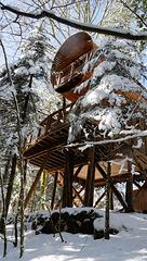 un nid dans les Vosges