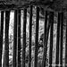 Animal Kingdom, Silver Back and Bamboo 040816