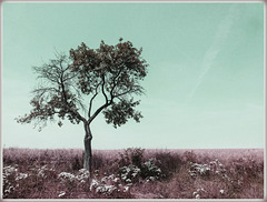 Week 1: Single Tree