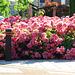Street Roses 2
